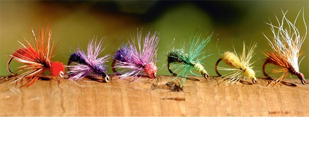 holkens-farglada-myror