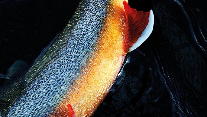 två fiskar dating saker att veta innan du dejtar en enda pappa