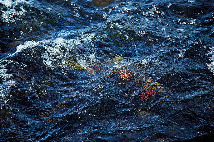 Att se en röding skymta i snabbt, klart vatten kan kännas en smula overkligt.
