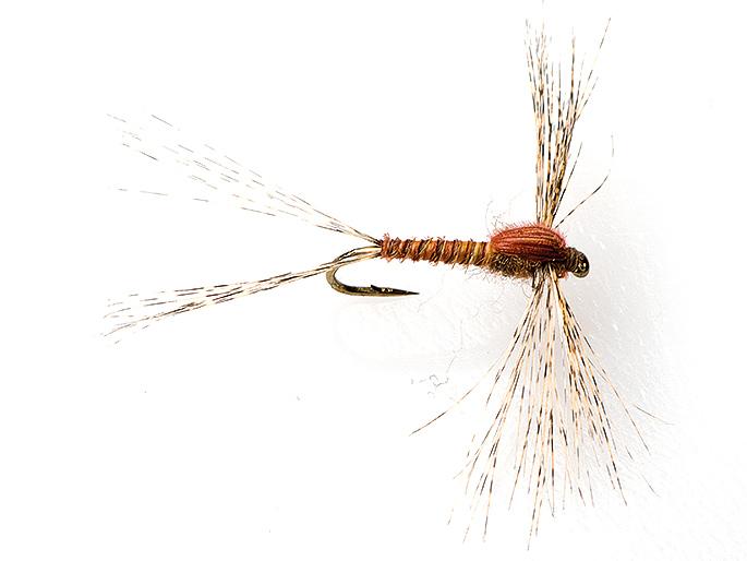 Spinn